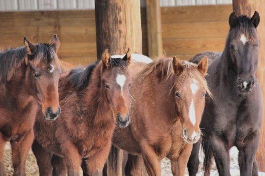 Ponies1